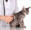 Ветеринарные клиники в Марево